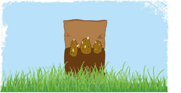 Illustration of seed potatoes in a bag sitting in the grass.