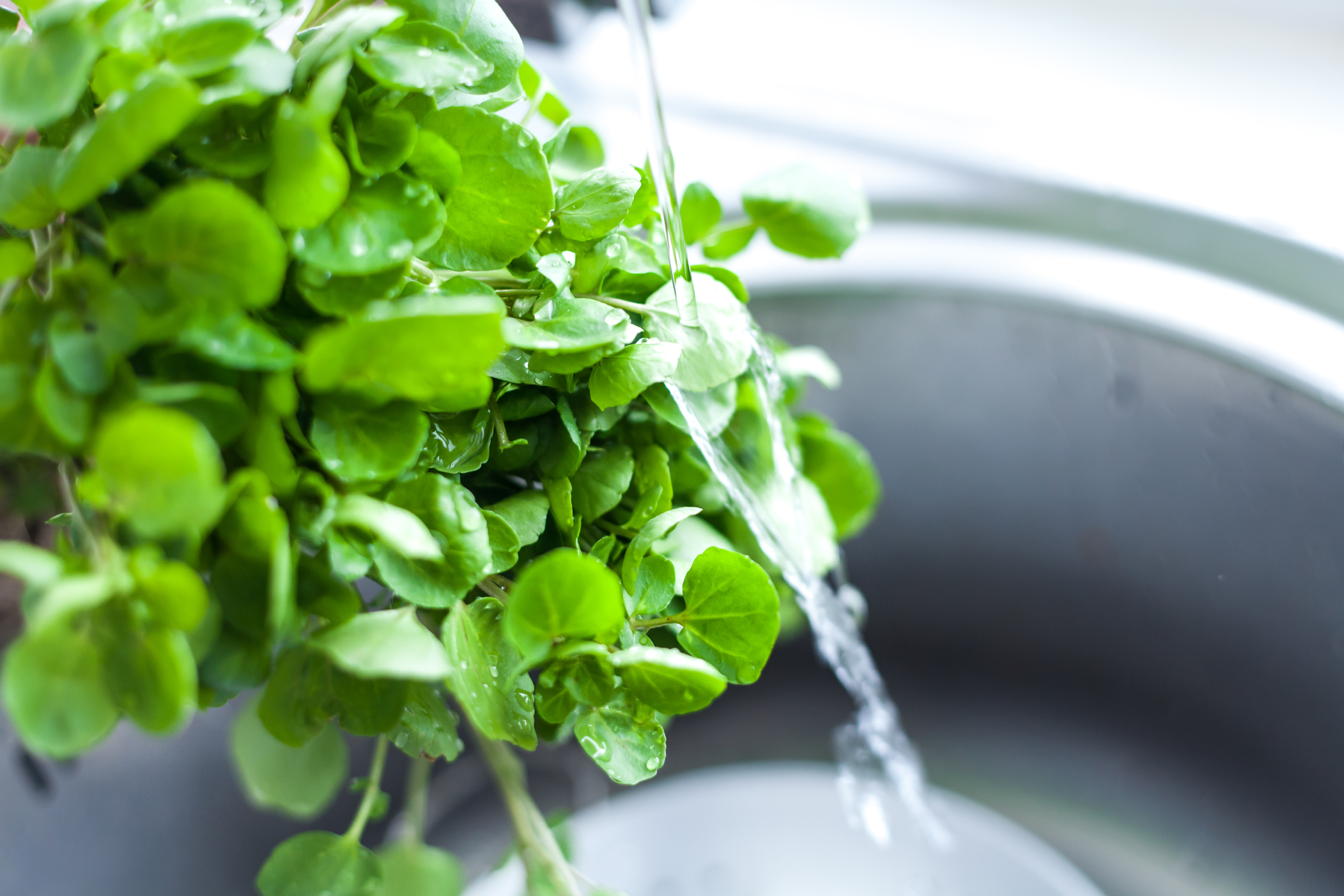 Grow your own watercress