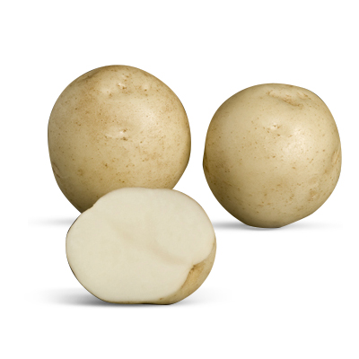 National variety: Rocket - supplied by Cygnet Potato Breeders